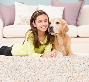 pet urine removal treatment carpet cleaning