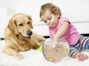 Protect Your Floors From Your Pet Complete Chem Dry