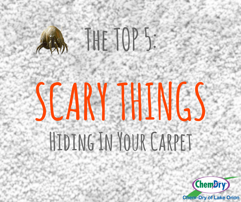 Scary Things Hiding in Your Carpet